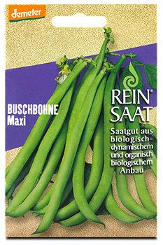 ReinSaat Saatgut Buschbohne Maxi